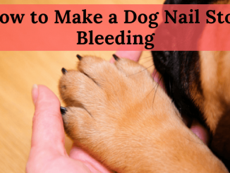 How to Make a Dog Nail Stop Bleeding