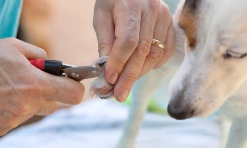 dog sharp clippers