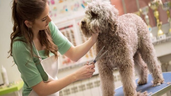sedate-a-dog-at-home-for-grooming