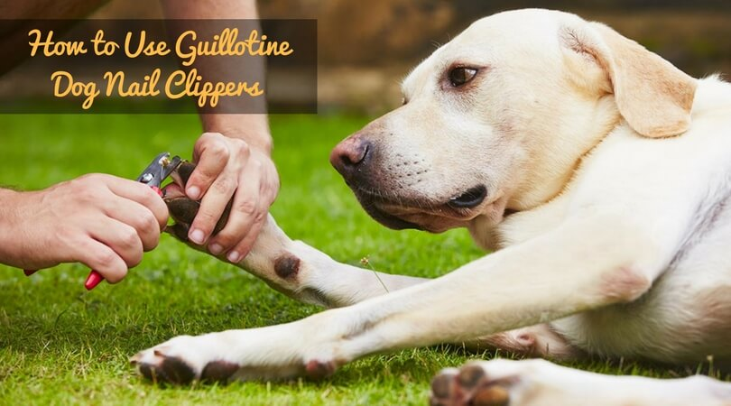 How to Use Guillotine Dog Nail Clipper