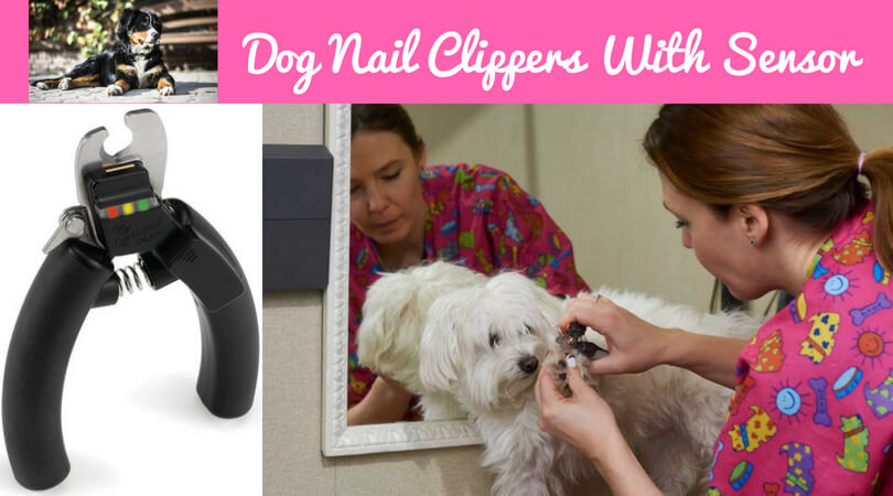 dog nail clippers with quick sensor