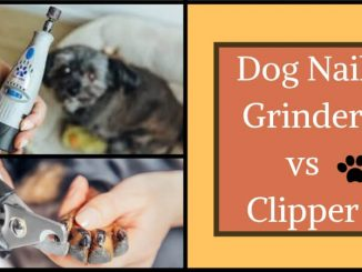 Dog Nail Grinder vs Clipper
