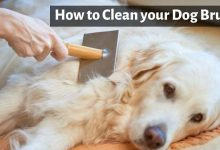 How to Clean your Dog Brush