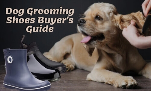 Dog Groomer Shoes Buyer's Guide