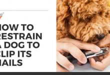 How to Restrain a Dog to Clip Its Nails