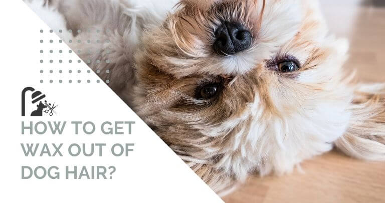 How To Get Wax Out of Dog Hair