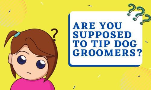 Are you supposed to tip dog groomers_