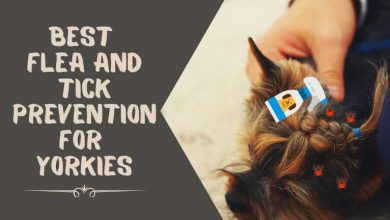 Best Flea and Tick Prevention for Yorkies
