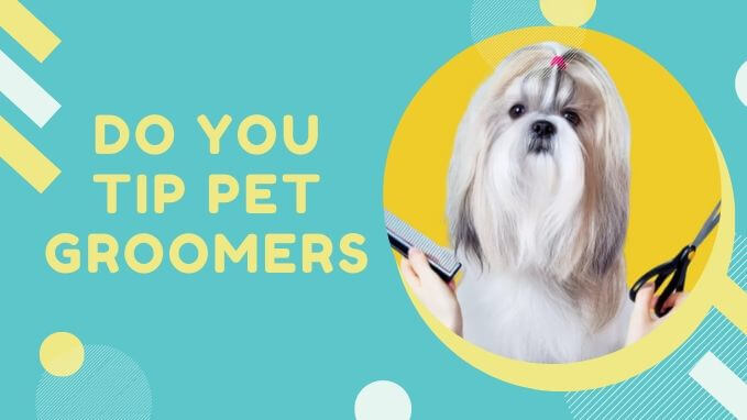 Do You Tip Pet Groomers