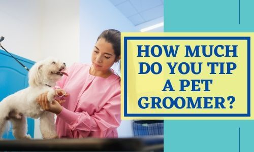 How much do you tip a pet groomer_