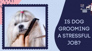 Is Dog Grooming a Stressful Job