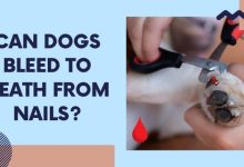 Can Dogs Bleed To Death From Nails